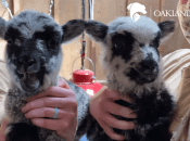 Meet Oakland's Zoo Newest Residents