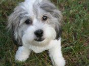 SF SPCA's Adoptathon Bash: Free Pet Adoptions & Free Cocktails  | SF