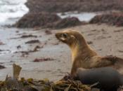 Marine Mammal Center Science Sunday | Sausalito