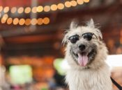 2018 Bay Area Pet Fair & Adoptathon | Pleasanton
