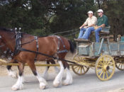 2017 Horse Fair & Free Stage Coach Rides | Woodside
