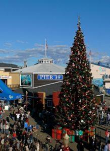 pier39_talltree