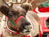 24 Holidays on 24th Street: Santa & Live Reindeer | Noe Valley