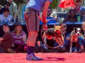 DogFest 2019: Pet Festival, Carnival & Parade | Duboce Park