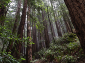 May Sunrise Tour of Muir Woods | North Bay