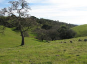 Vallejo's 4th of July Holiday Hike | 2019