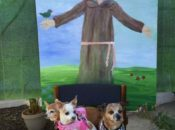 Blessing of the Animals on St. Francis' Feast Day | SF