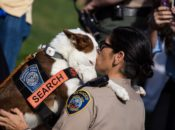 """Bark at the Park: K9 Heroes"" Military, Police & Fire Dog Demos 