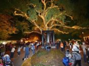 2017 Lighting of the Old Oak Tree | Danville