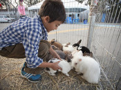 2018 Bayview Harvest Festival: Acrobats, Free Pony Rides & Petting Zoo | SF
