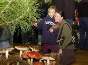 44th Annual Fungus Fair: Shroom Science & Cooking Demos | Santa Cruz