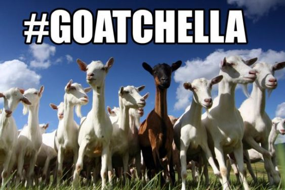 Goatchella 2019: Goat Festival at the Ferry Building | SF