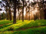 2019 Spring Equinox: Magic Meadow Ritual | Golden Gate Park
