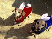 2019 Weiner Dog Easter Egg Hunt | Danville