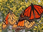19th Annual Butterfly & Bird Festival | Fremont