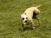 8th Annual Three Legged Dog Picnic | Duboce Park