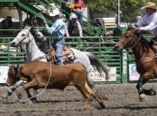 Livermore Rodeo $1 Night: Team Roping & Wild Cow Milking | East Bay