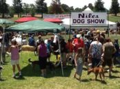 2019 Niles Dog Show: Family Dogs & Family Fun | East Bay