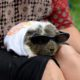 Bay Area Pignic: A Picnic For You & Your Guinea Pigs | Novato