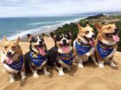 Corgi Con Fall 2021: Massive Dogo Beach Paw-ty (Ocean Beach)
