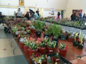 The Cactus & Succulent Society 14th Annual Fall Show & Sale | Sunnyvale