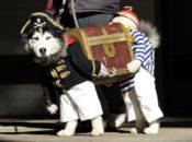 2nd Annual Free Pet Parade | Downtown Berkeley