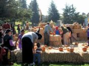 13th Annual Pumpkin Festival | Mountain View