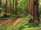 Redwood State Parks Free Day-Use Parking Passes