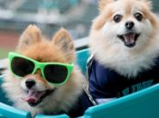 Christmas in the Park: Dog Day at the Park   San Jose