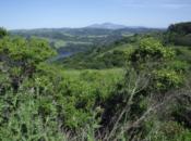 New Year's Day Sierra Singles Hike | Briones Regional Park