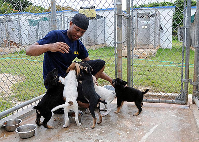 Lake County Animal Shelter Adoptable Dogs