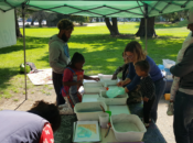 Figment 2018: Interactive Arts, Music, Game & Craft Festival in the Park | Oakland