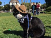 First Caturdays at Dolores Park: Unofficial Social Gathering for Cats | SF