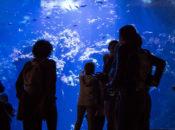Spotlight NightLife   California Academy of Sciences