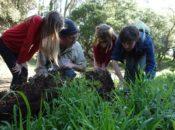 2018 BioBlitz: City Nature Treasure Hunt Challenge | Noe Valley