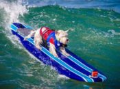 2019 World Dog Surfing Championships | Pacifica