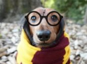 Harry Potter Trivia + Dog Halloween Costume Contest | SF