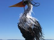 Bird Watching: Find the Rare Birds of SF | Heron's Head