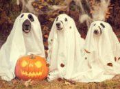 4th Annual Halloween Pubquiz & Dog Costume   SF