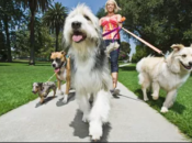 """""""Finding Christopher Park"""" Festival: Doggie Fashion Show, Puppets & Live Music 