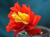 Paper Flower Crafts Workshop | ¡VIVA! SF's Free Latino Hispanic Culture Festival