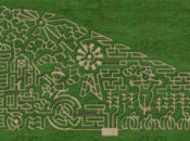 11 Best Corn Mazes in the Bay Area
