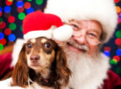 Pet Photo Night with Santa at Stanford Shopping Center | Palo Alto
