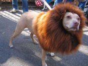 1st Annual Free Pet Parade | Downtown Berkeley