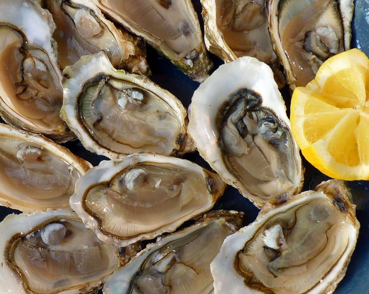 "Free ""Oysters on the Half Shell"" Fridays 
