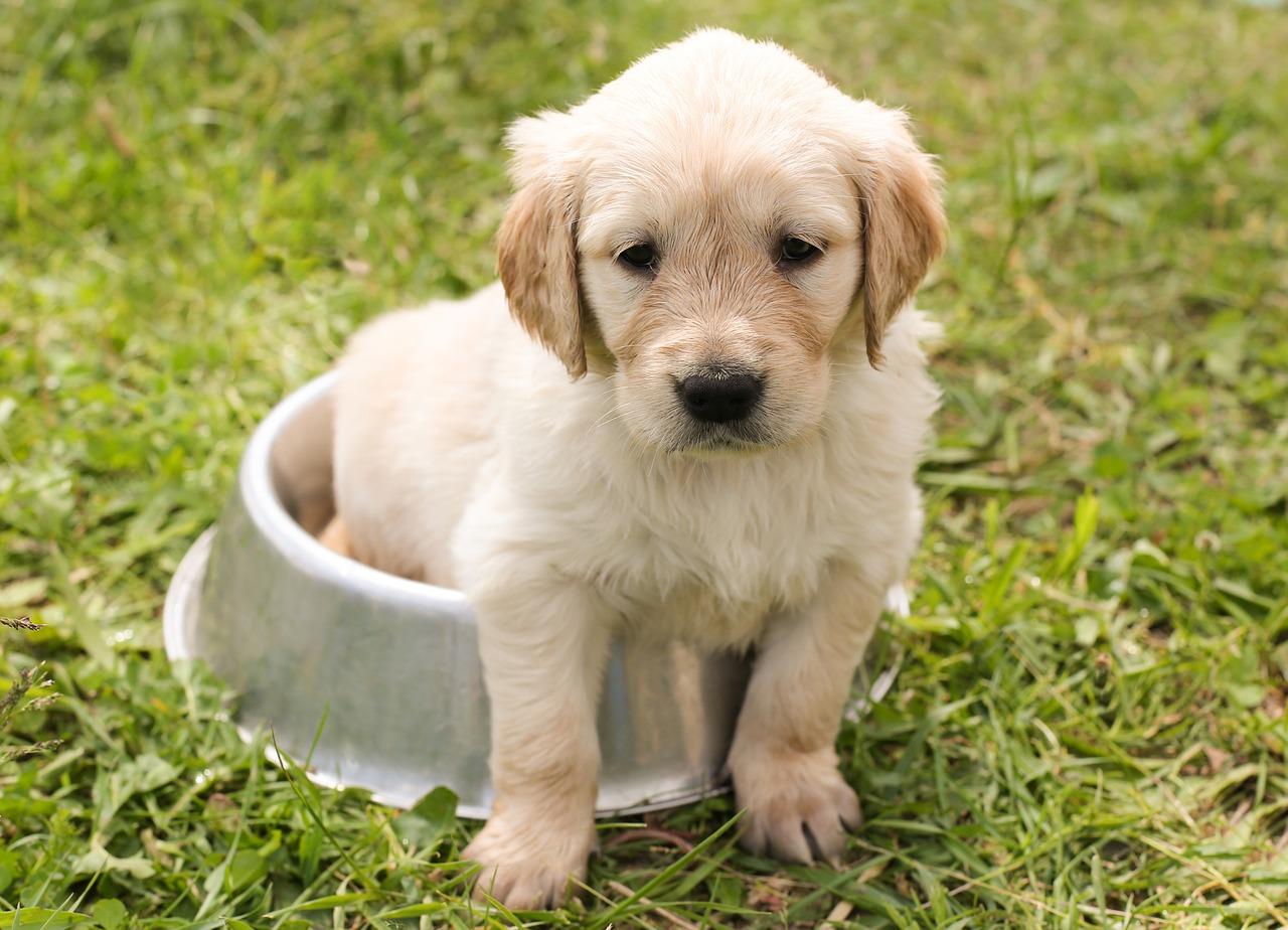 SPCA's PopUp: Puppy Parent Orientation Class | Embarcadero
