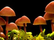 Fungus Among Us NightLife | California Academy of Sciences