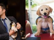 """Dogs' Day Out"" with Instagram's The Dogist 