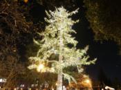 Holiday Tree Lighting & Live Digital Art | Menlo Park