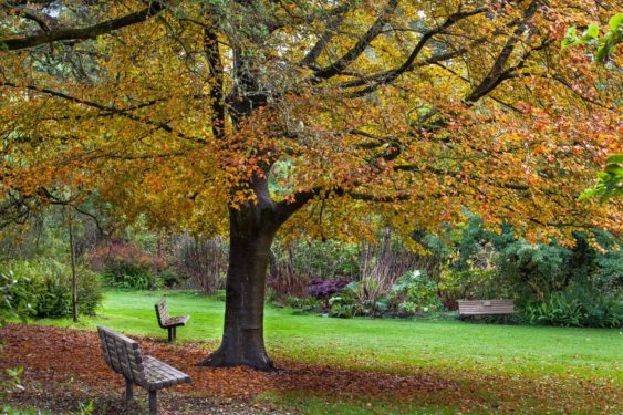 Peak Of Fall Colors At Sf Botanical Garden Golden Gate Park